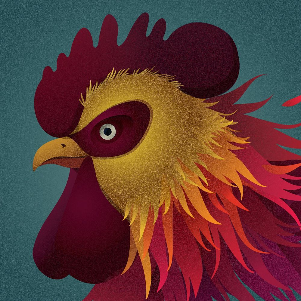 Rooster - image 1 - student project