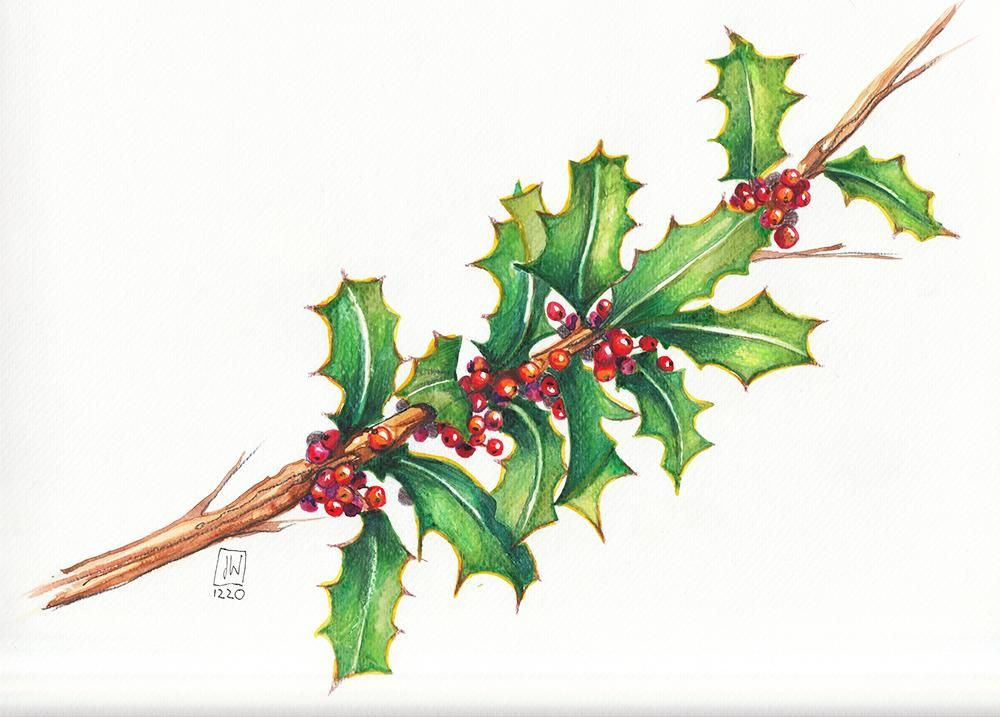 Stechpalme - Holly & Berries - image 6 - student project