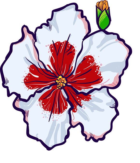 Hibiscus - image 2 - student project