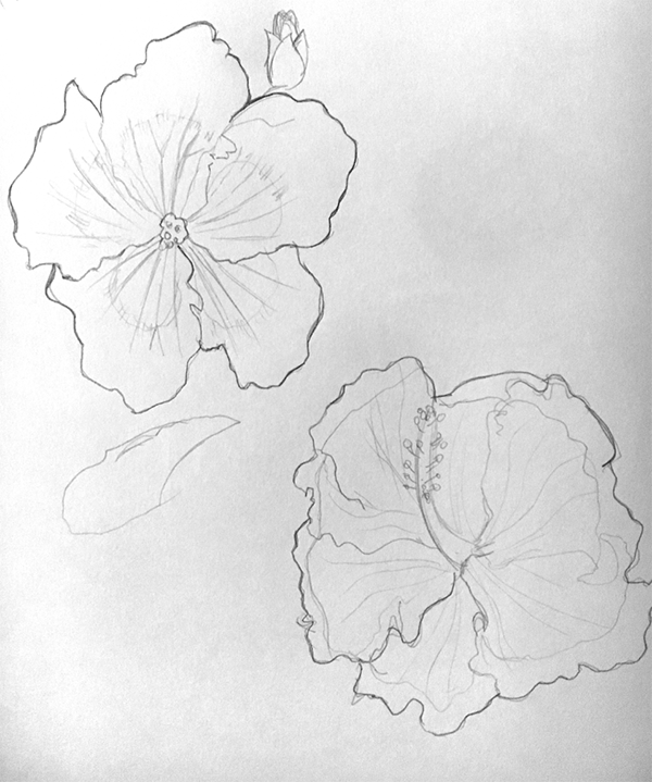 Hibiscus - image 1 - student project