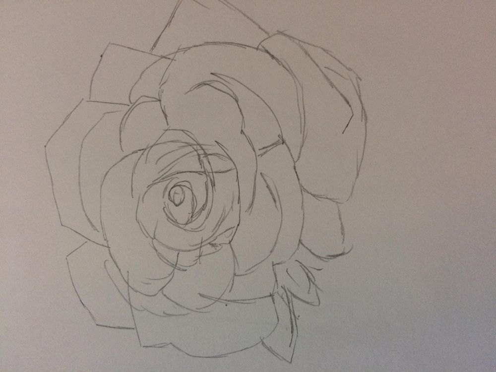 Rose sketch - image 3 - student project
