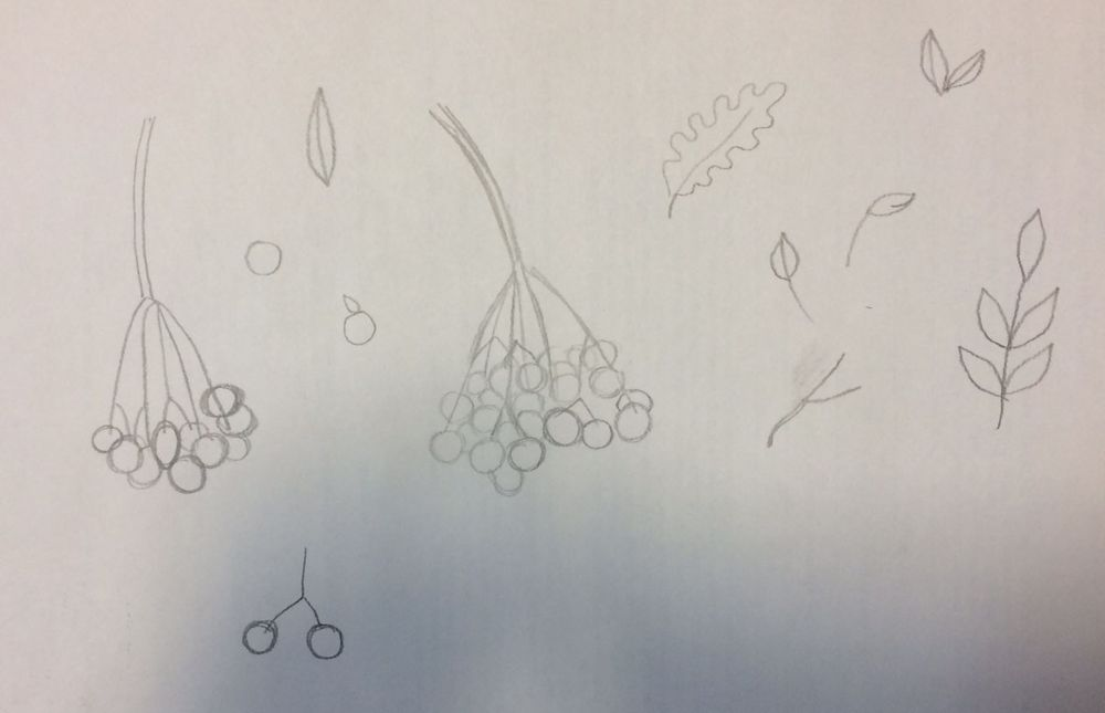 guelder rose - image 1 - student project