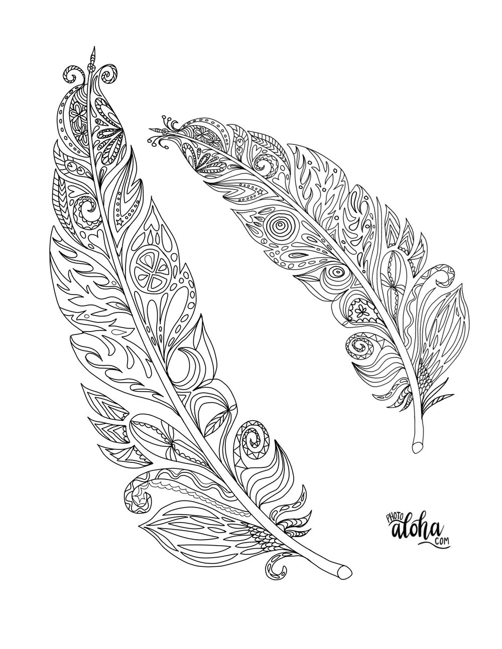 Feathers for coloring book challenge - image 1 - student project