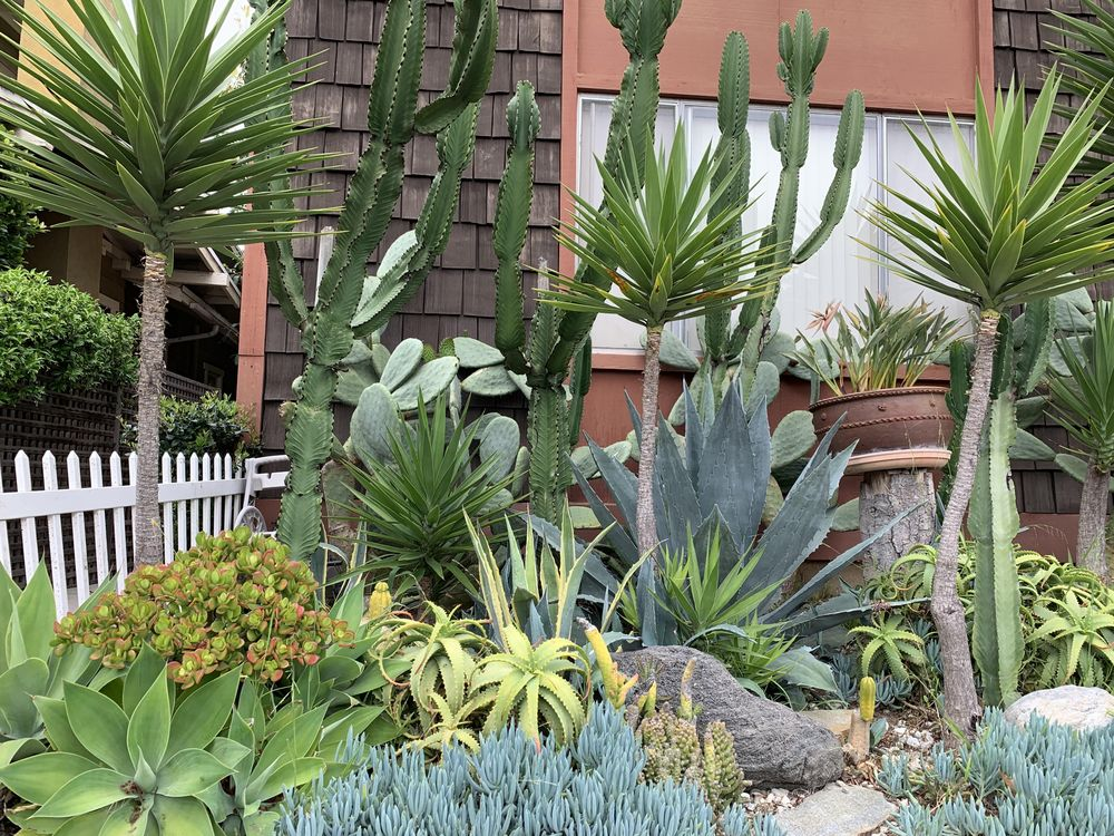 Cacti Dream Garden - image 1 - student project