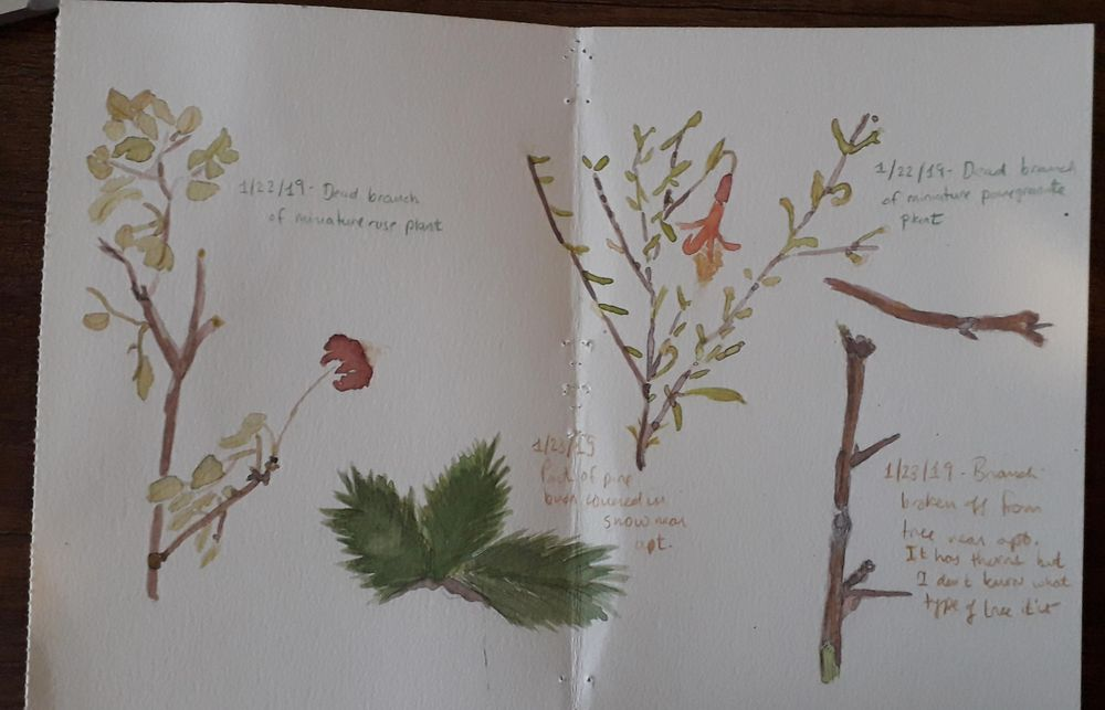 Updated nature journal - image 6 - student project