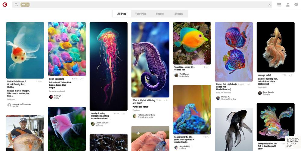 Sea Creatures & Cacti - image 1 - student project