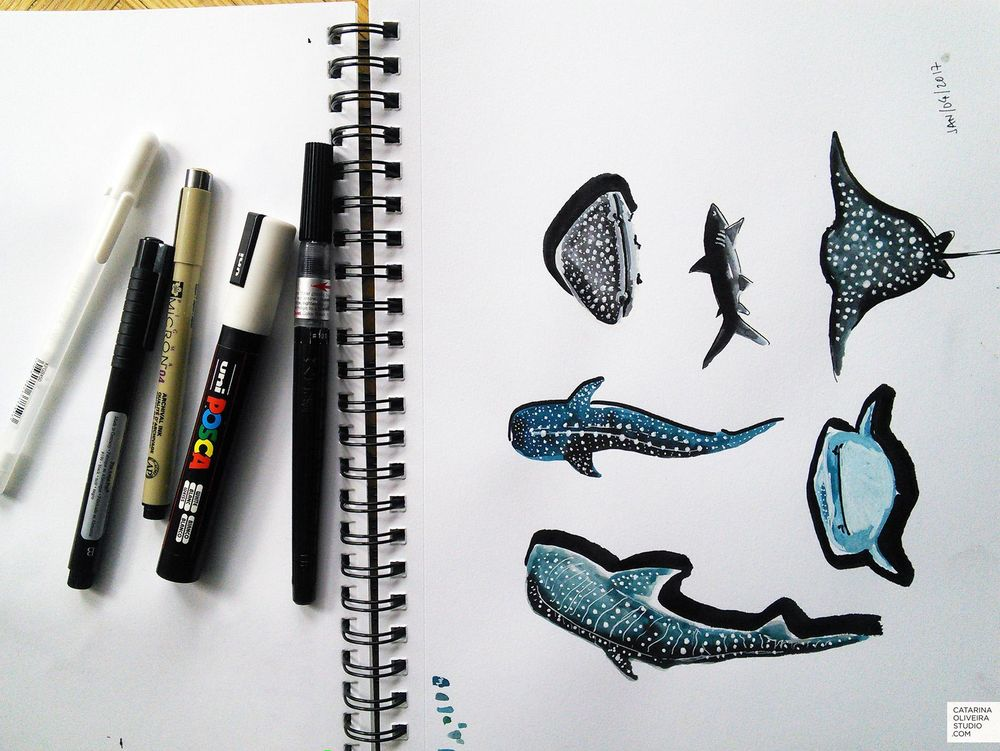 Sea Creatures & Cacti - image 4 - student project