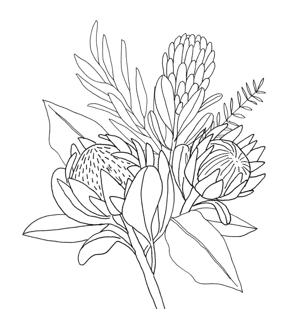 King Protea & Eucalyptus - image 4 - student project