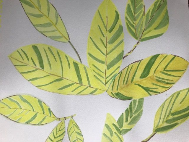 Argentine Leaves - image 1 - student project