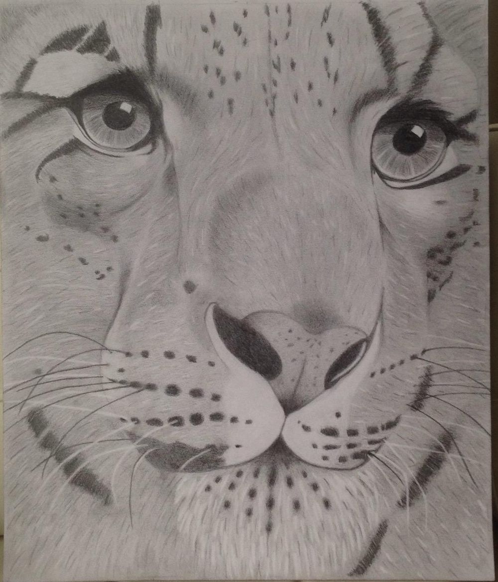 tigre - image 1 - student project