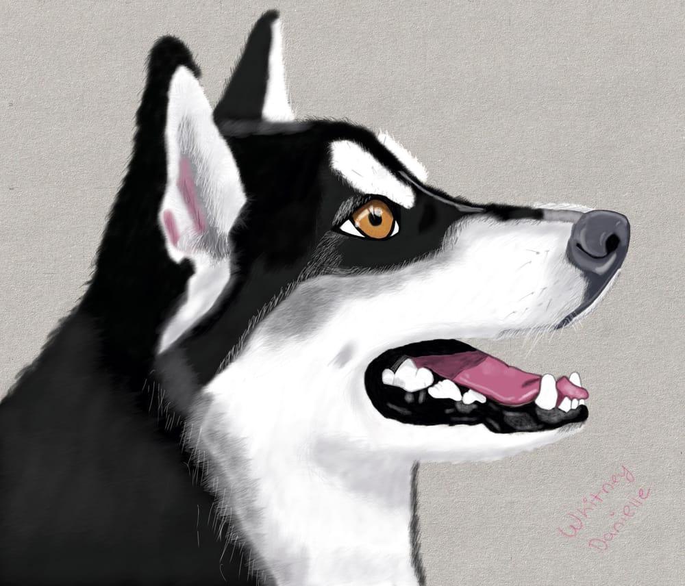 Digital husky - image 1 - student project