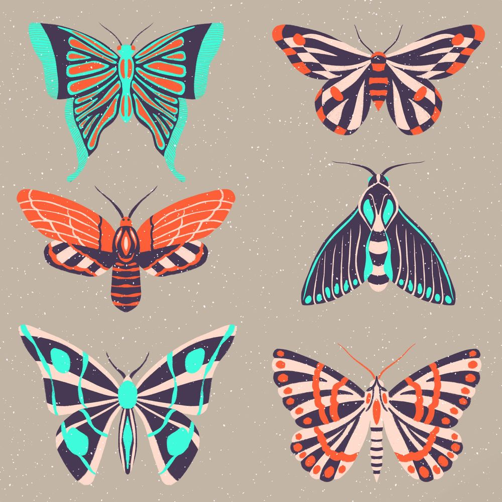 Insect Illustrations and Animations in Procreate - image 7 - student project