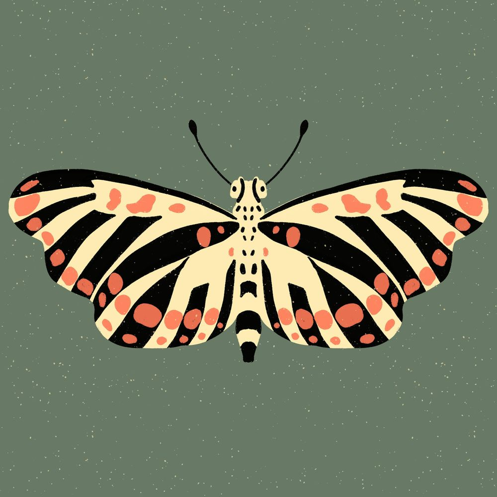 Insect Illustrations and Animations in Procreate - image 1 - student project