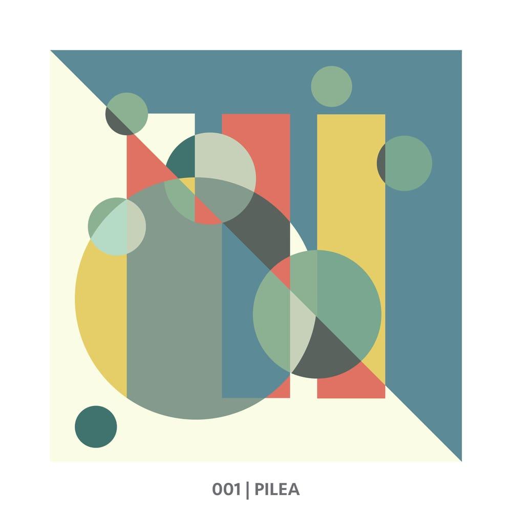 001 Pilea - image 1 - student project