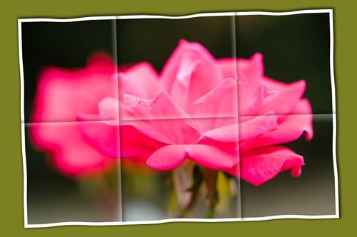 A Rose Keepsake - image 1 - student project