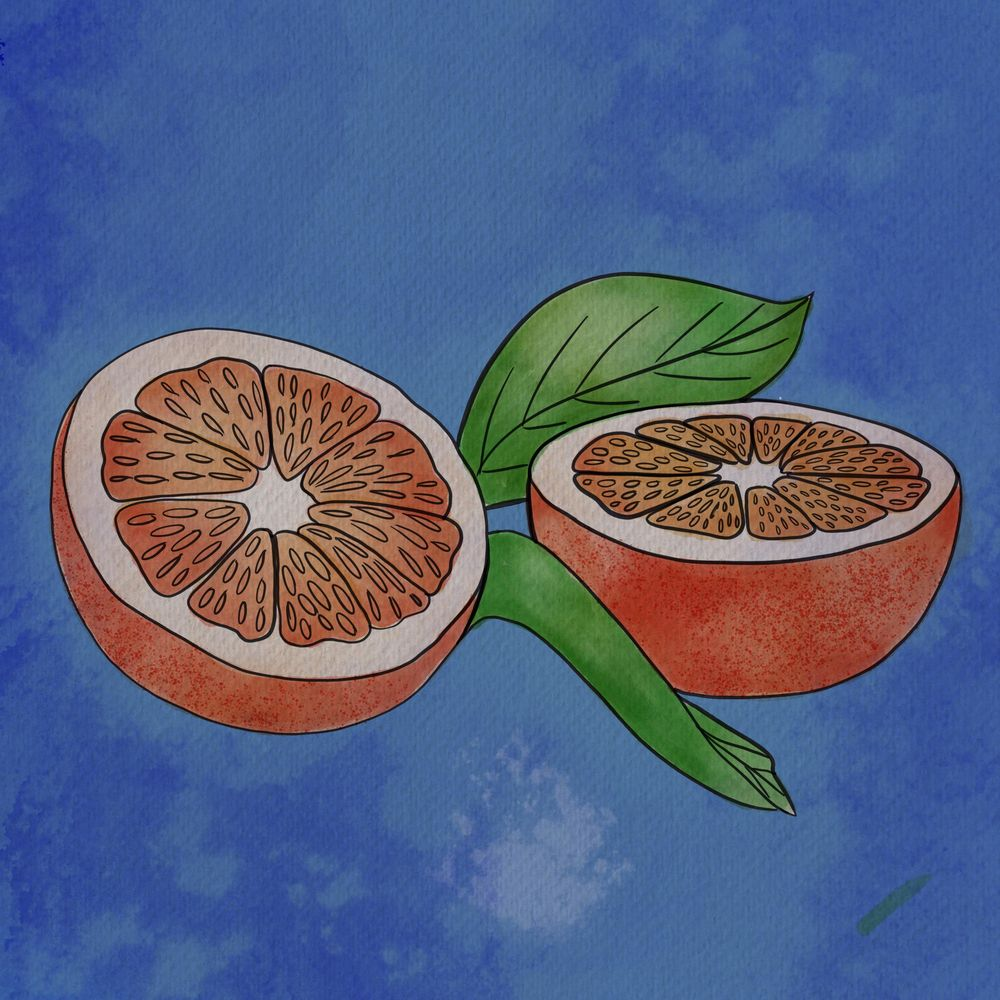 Fruit watercolors - image 1 - student project