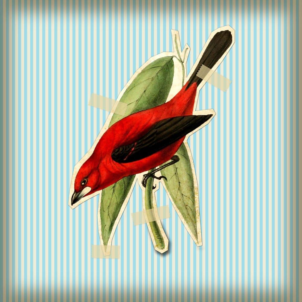 Vintage Bird - image 1 - student project
