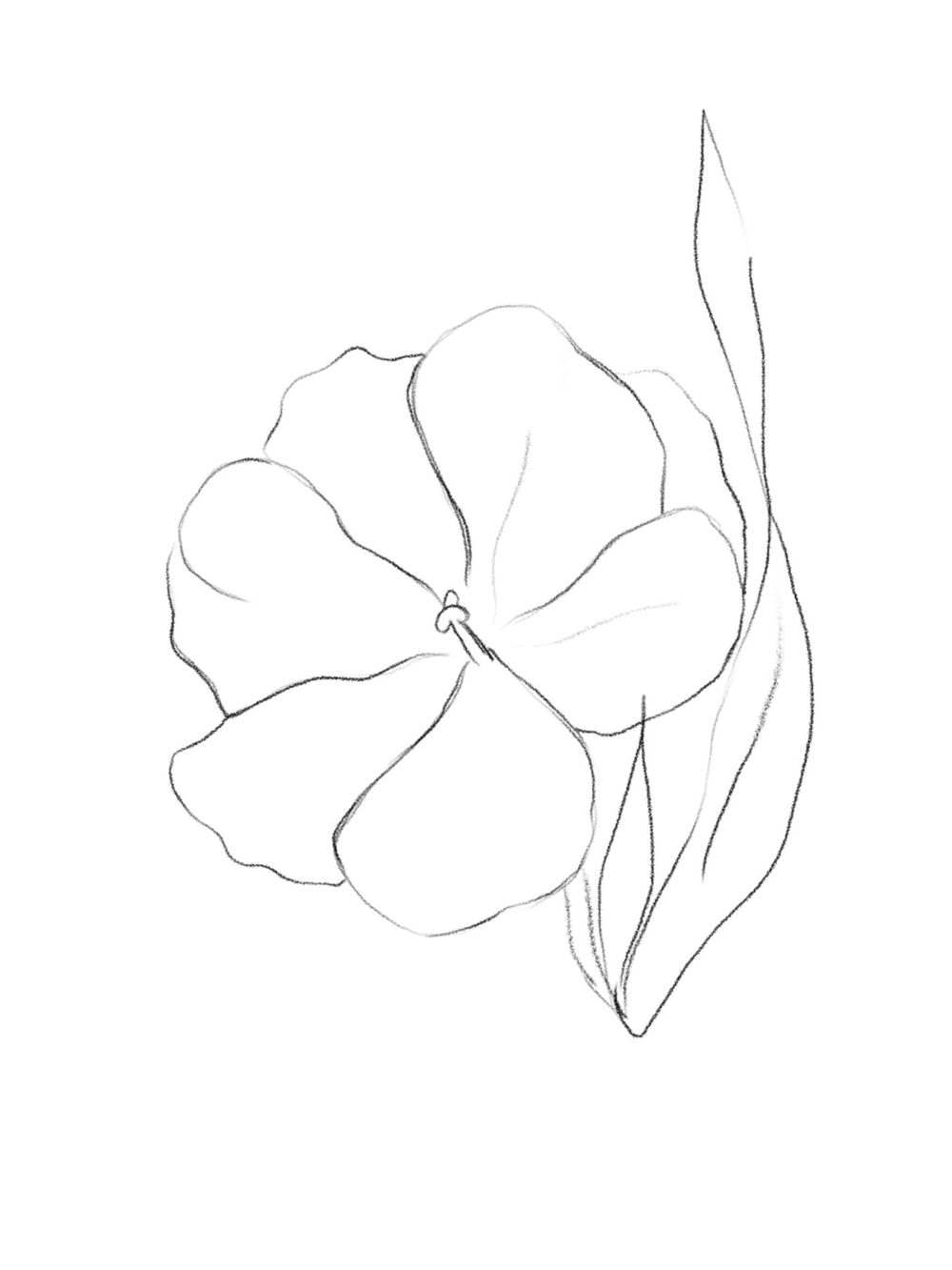 Flower Rough Sketch - image 1 - student project