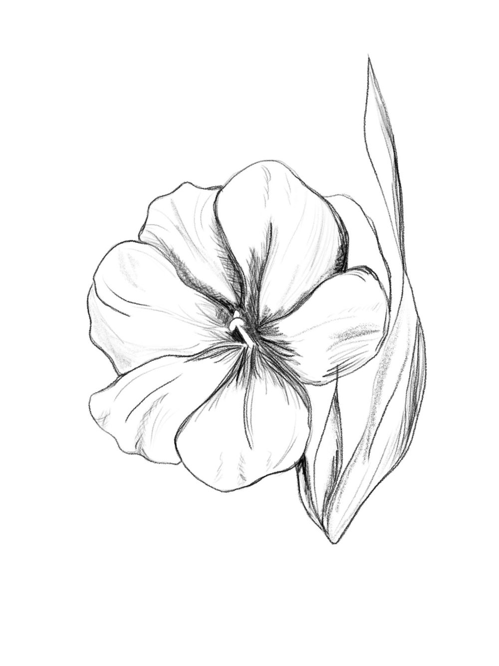 Flower Rough Sketch - image 3 - student project