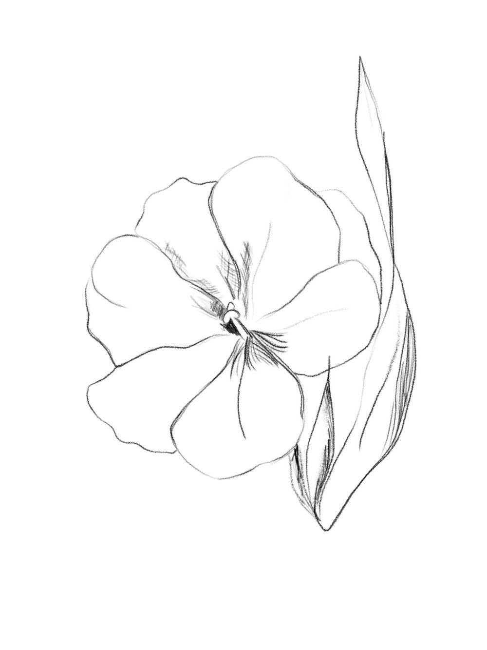 Flower Rough Sketch - image 2 - student project