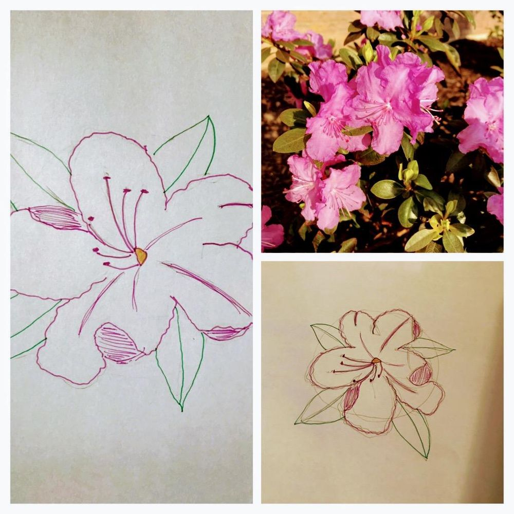 Rhododendron Sketch - image 1 - student project