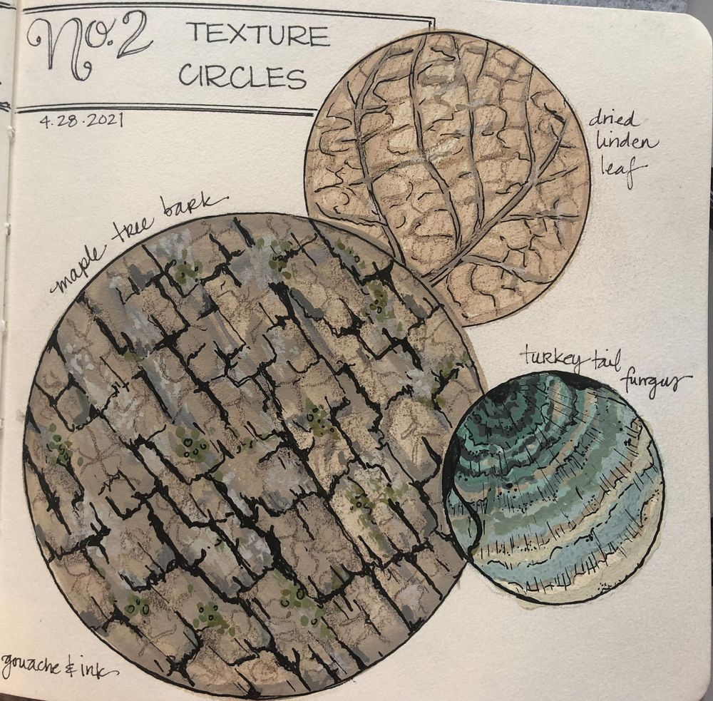 Urban Nature Journaling - image 9 - student project