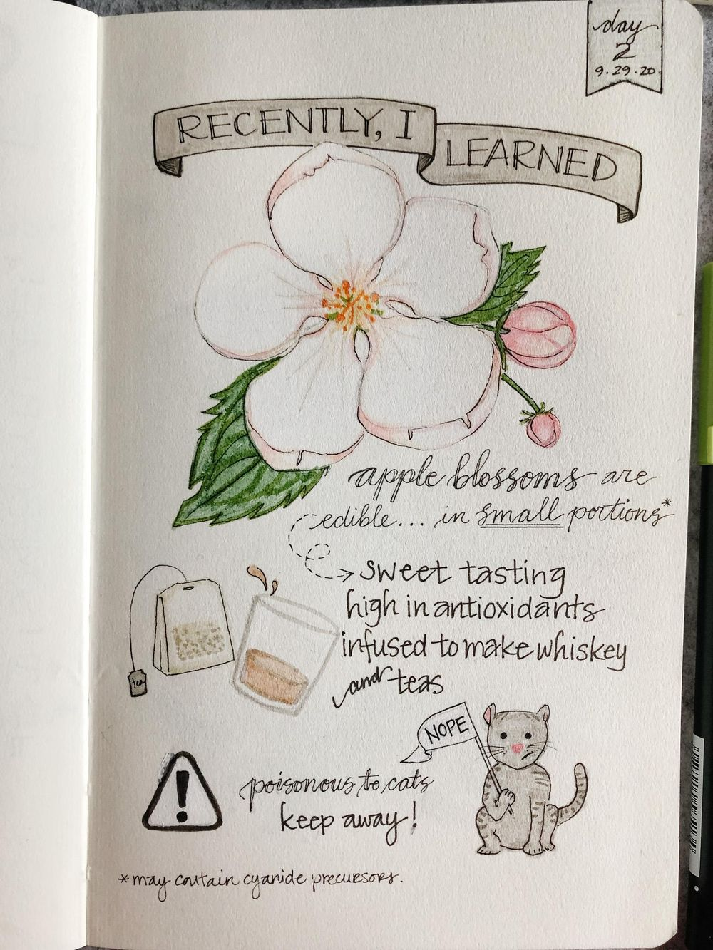 Illustrated Journalling 28 day challenge- PT 1 - image 12 - student project