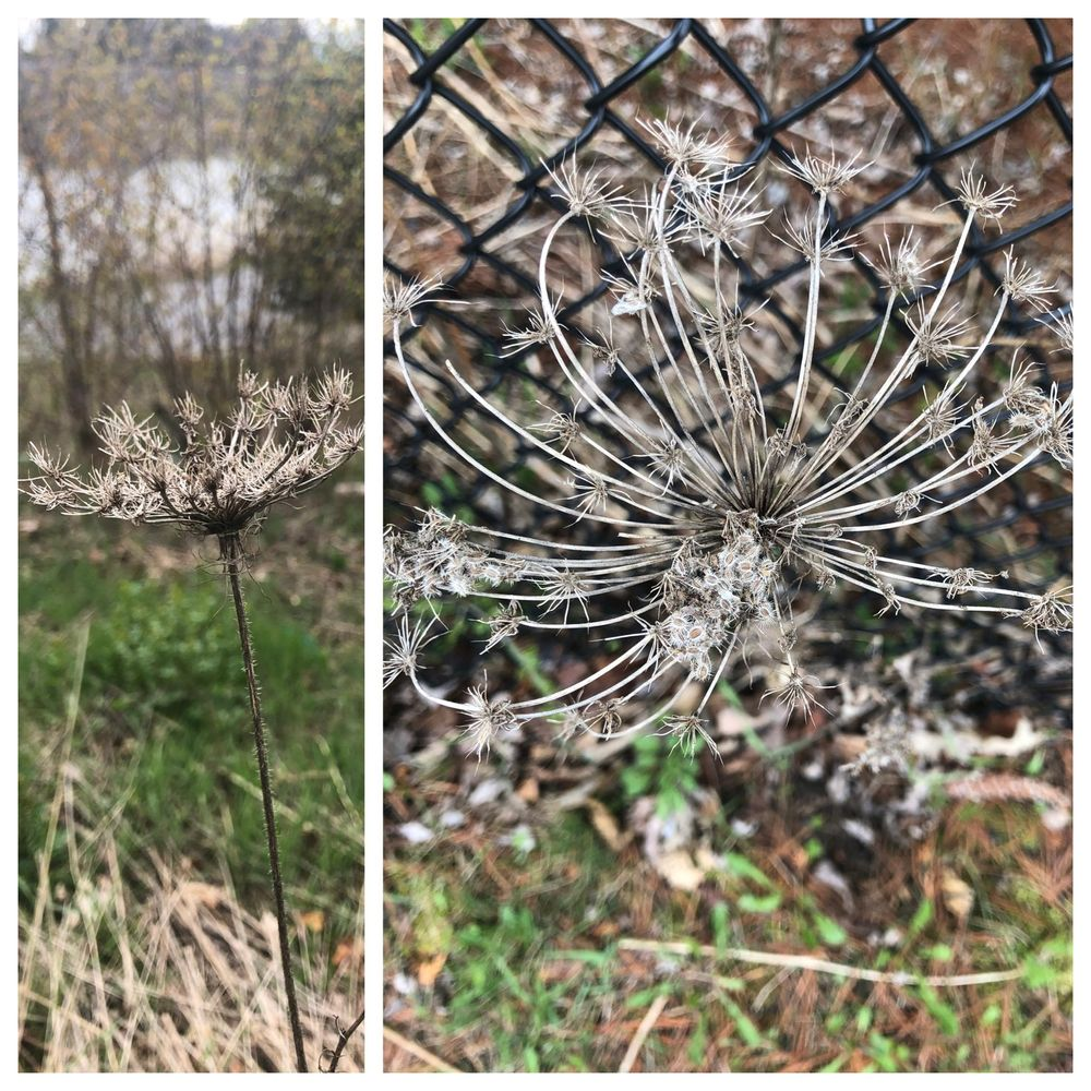 Urban Nature Journaling - image 8 - student project