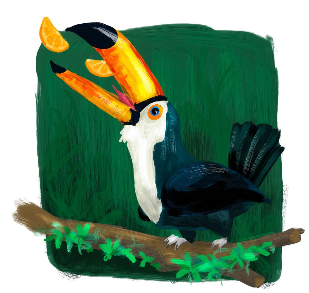 Feeding the Toucan - image 1 - student project