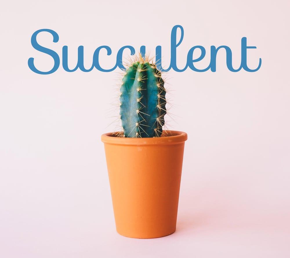 Plantae - image 1 - student project
