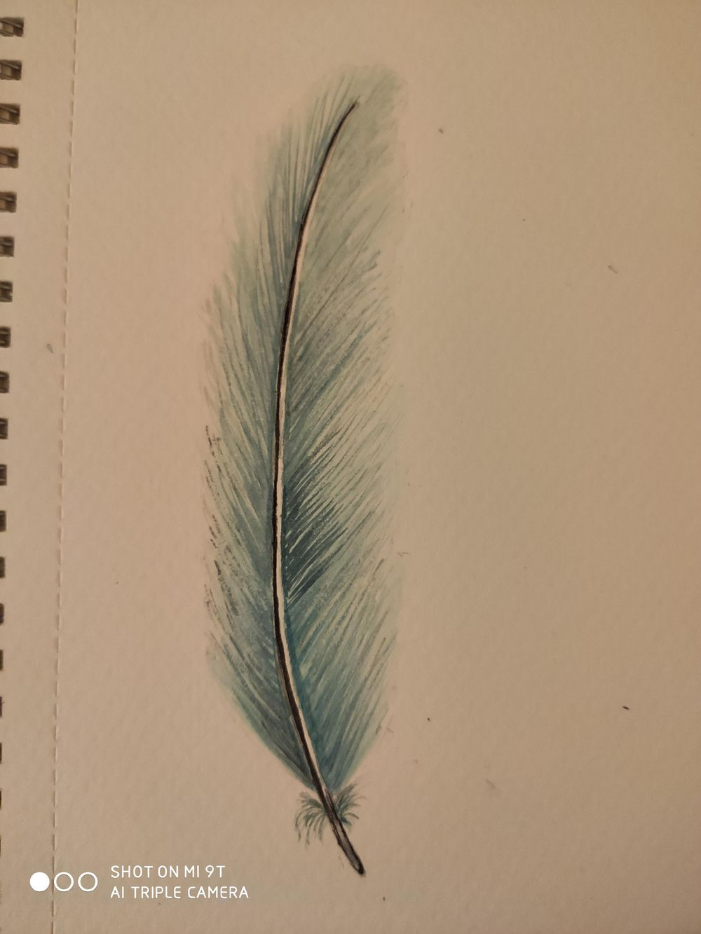 1. Feathers - image 3 - student project