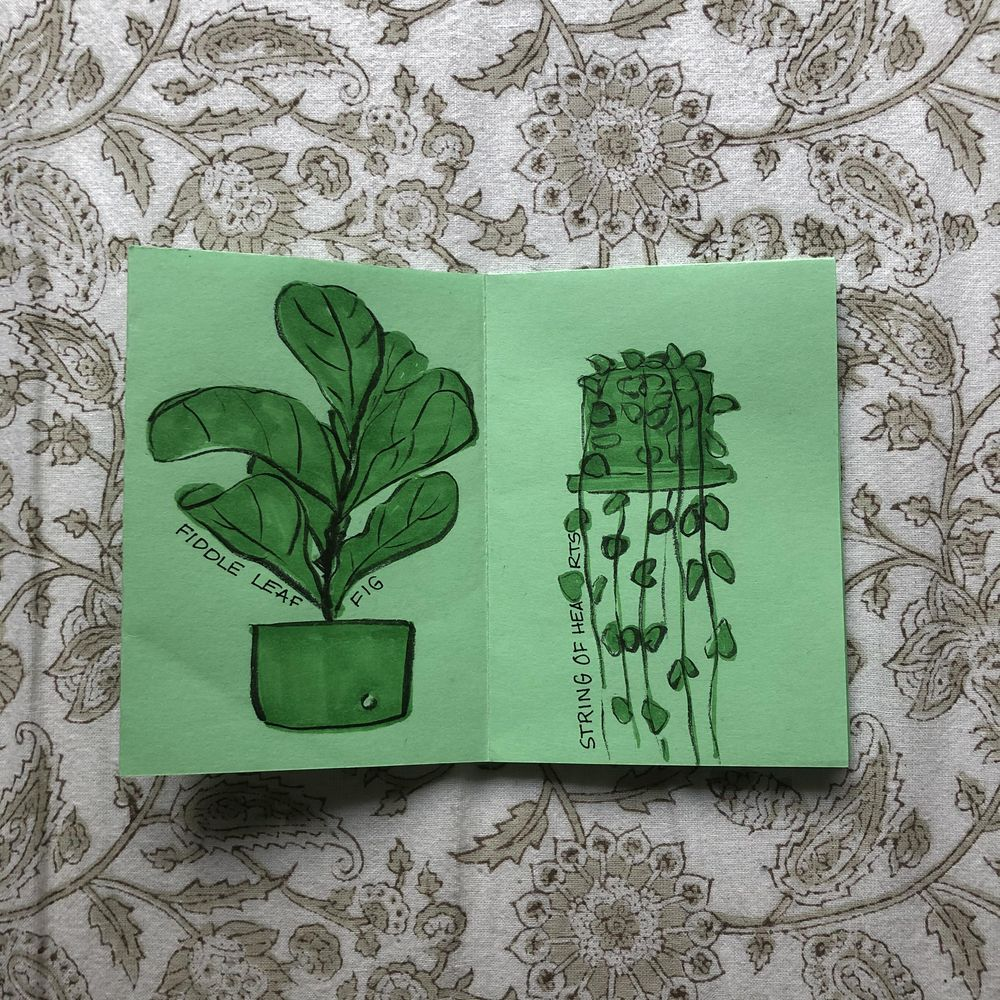 Plants I have killed - image 2 - student project