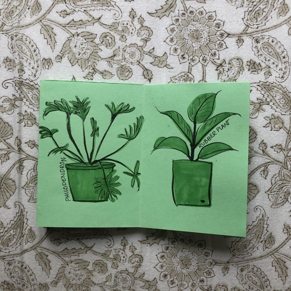 Plants I have killed - image 4 - student project