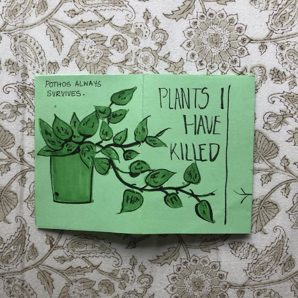 Plants I have killed - image 6 - student project