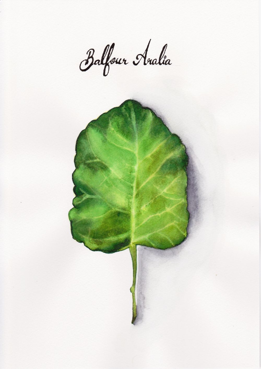 Balfour Aralia - image 1 - student project