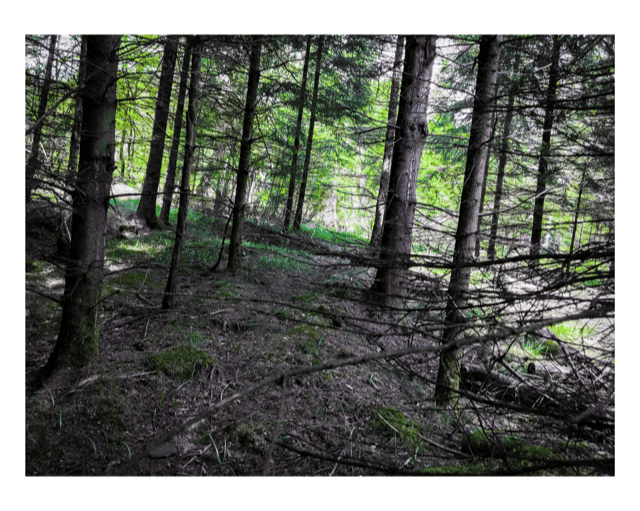 forest album - image 1 - student project