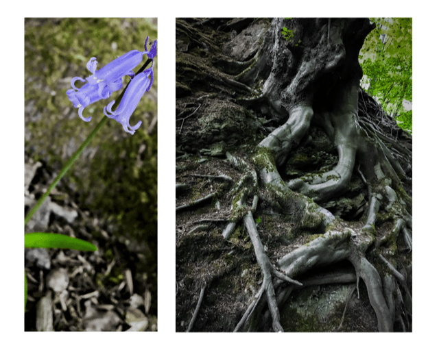 forest album - image 3 - student project