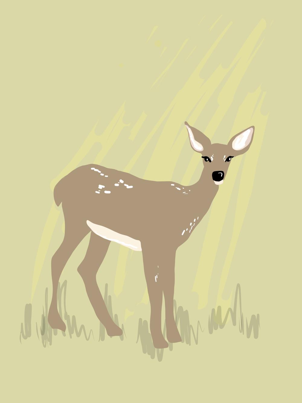 Deer vector illustration - image 2 - student project