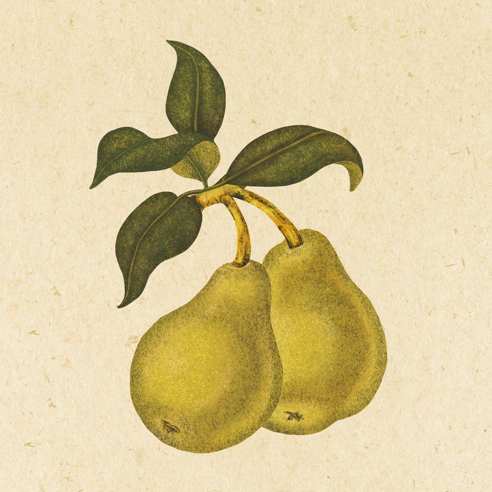 Textured Pears - image 1 - student project