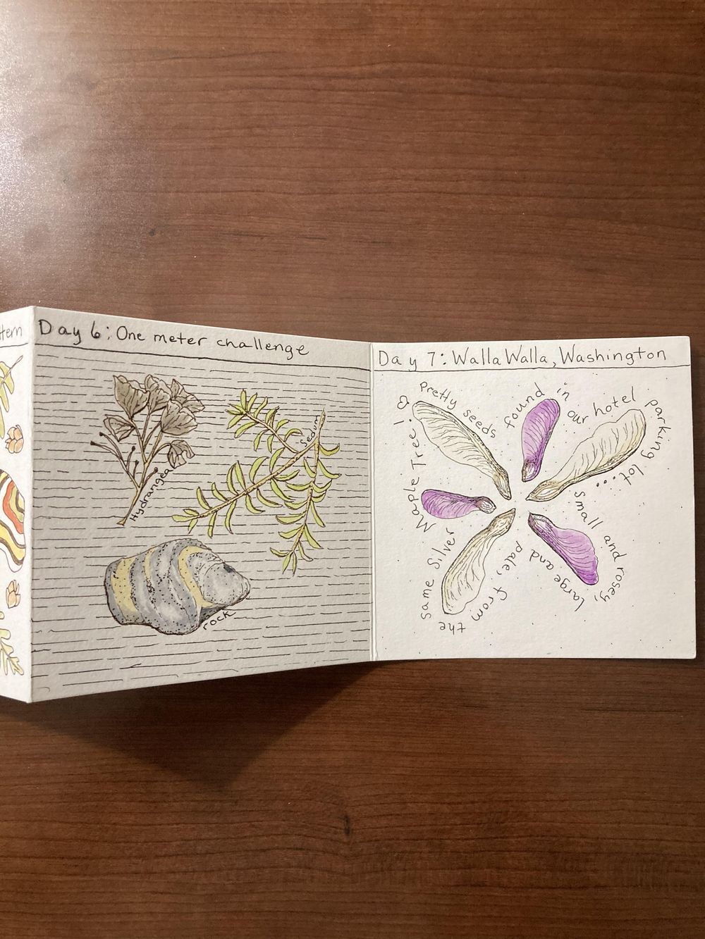 Urban nature journaling - image 3 - student project