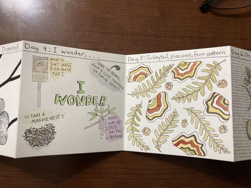 Urban nature journaling - image 2 - student project