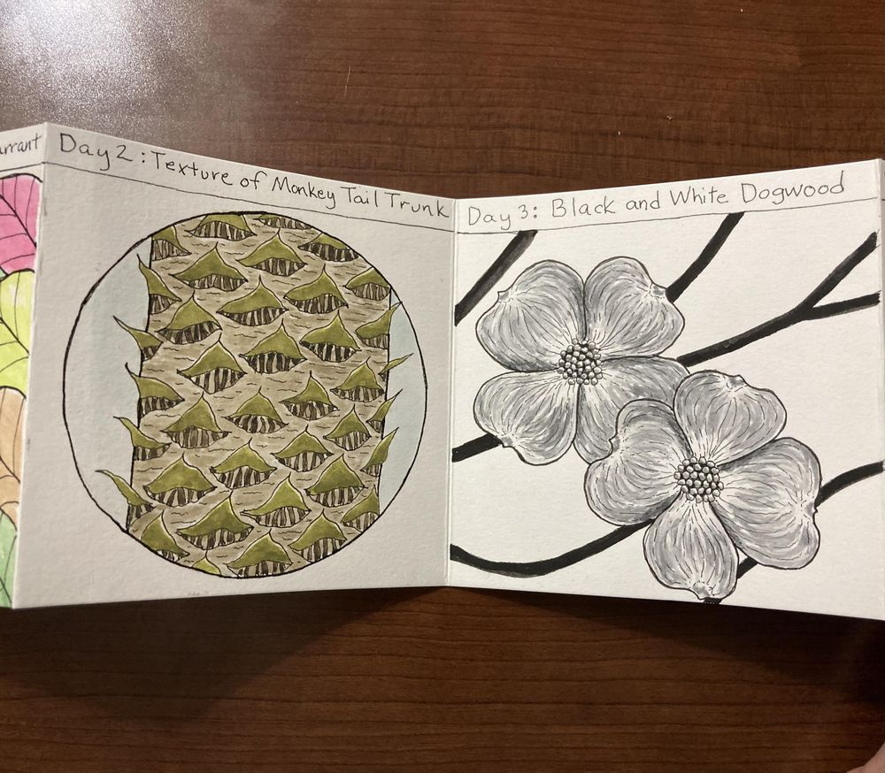 Urban nature journaling - image 1 - student project
