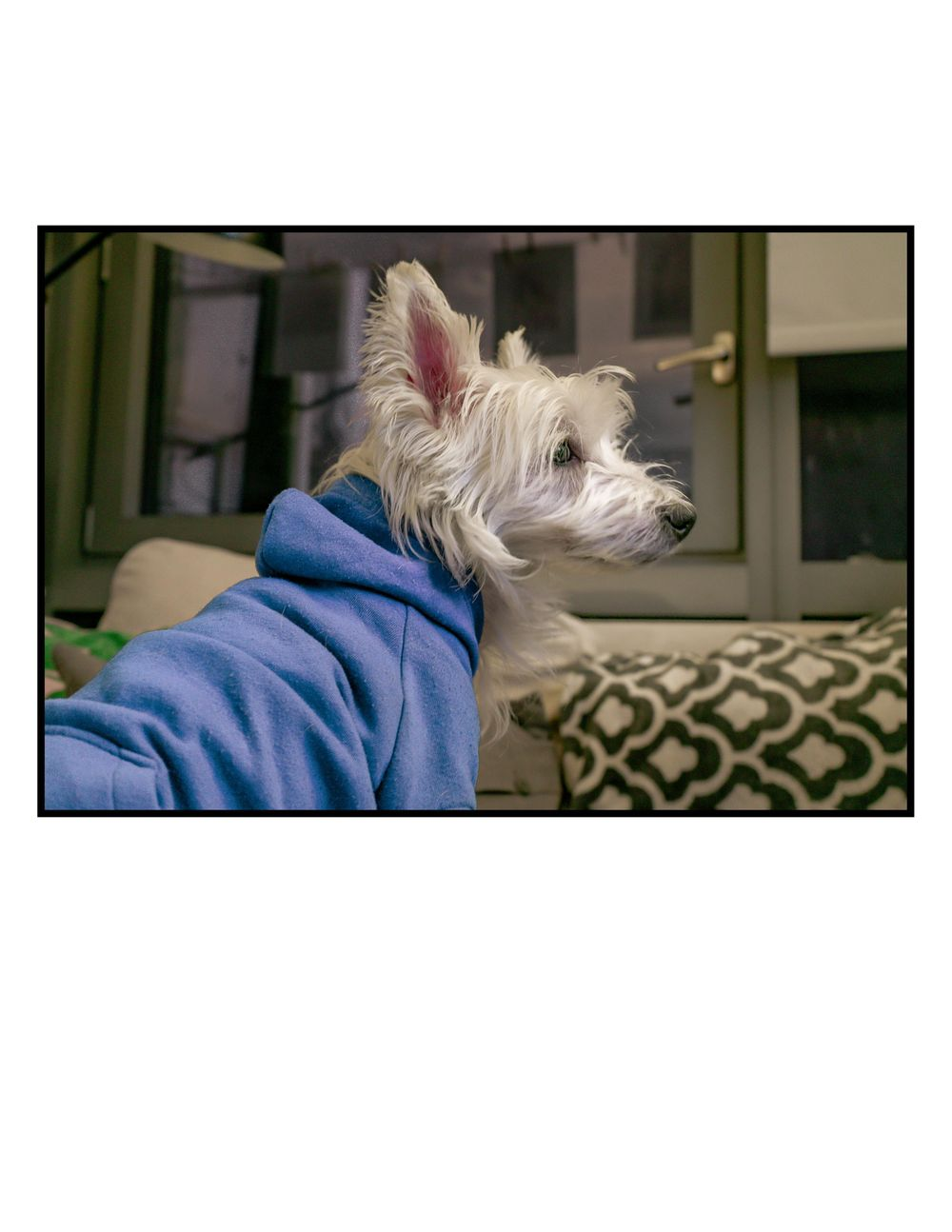 My dog Bastian, is really a grumpy old man. - image 2 - student project