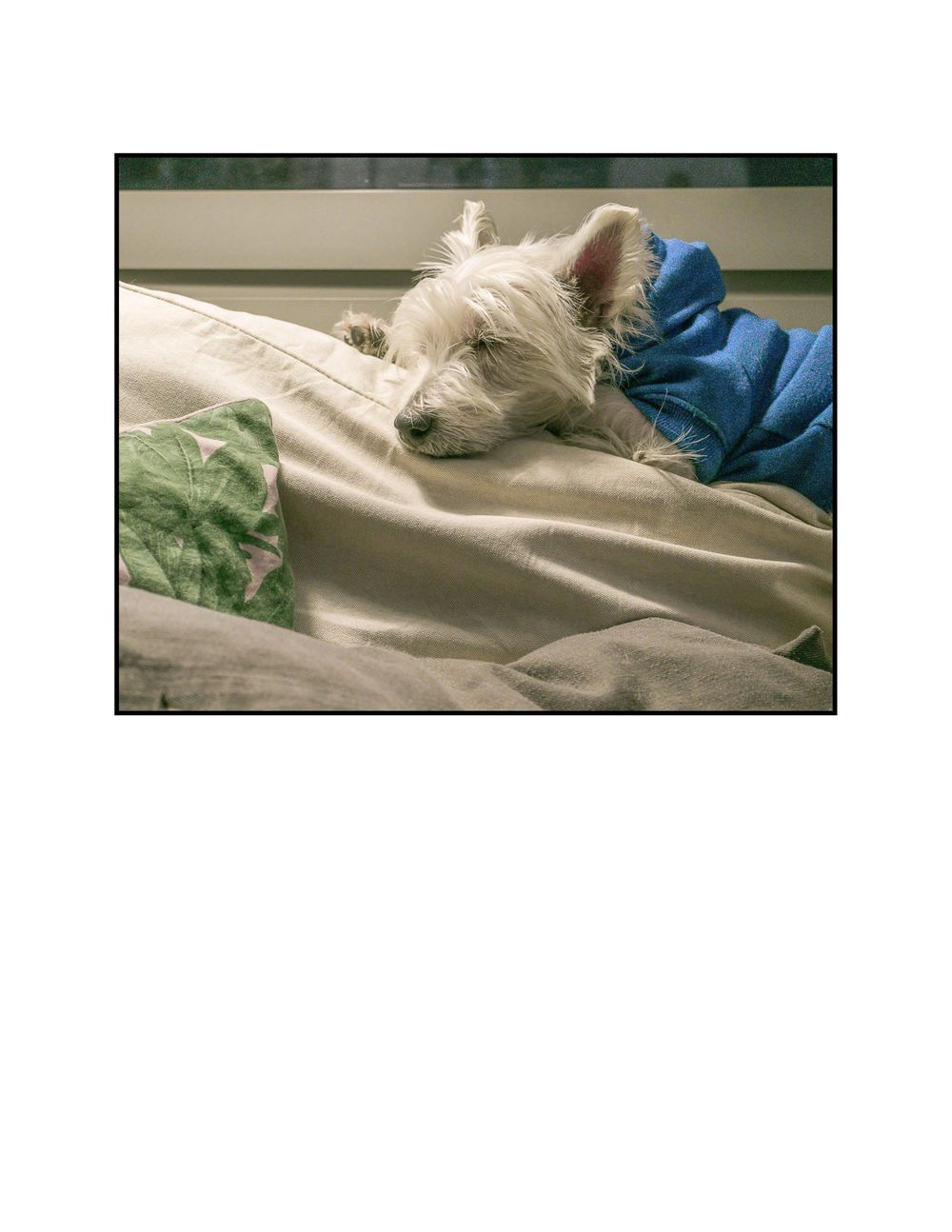 My dog Bastian, is really a grumpy old man. - image 3 - student project