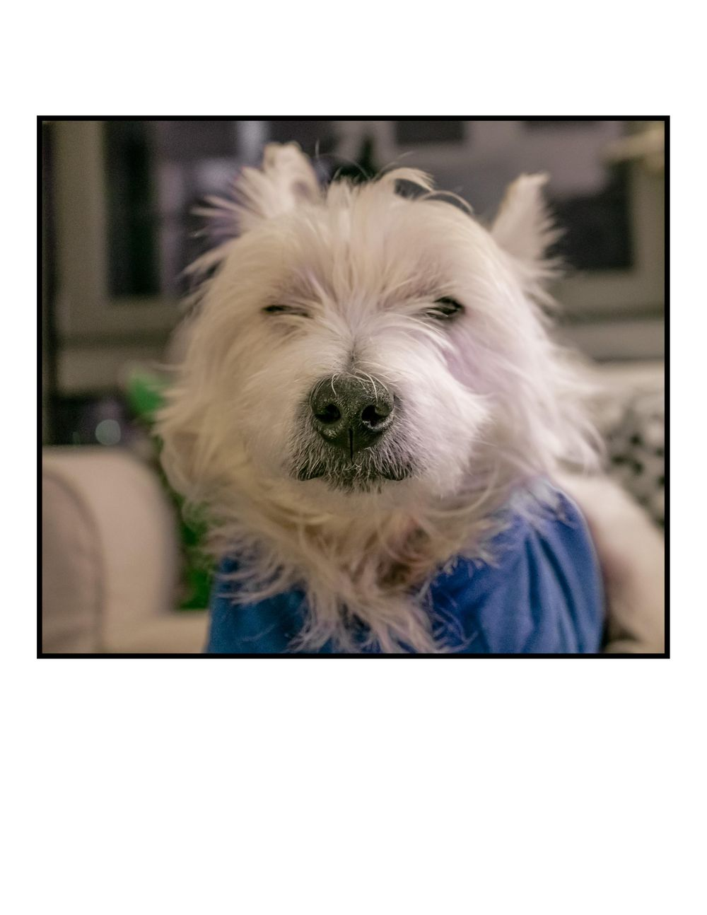 My dog Bastian, is really a grumpy old man. - image 1 - student project