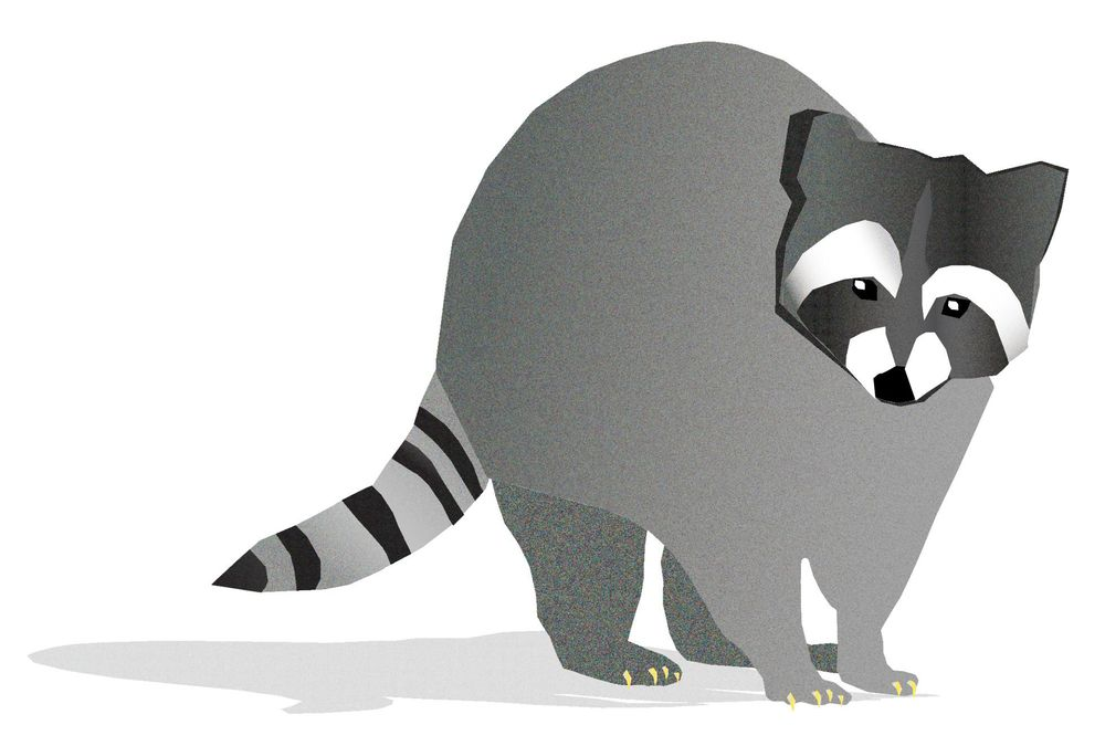 A quick illustration  of a Raccoon - image 1 - student project