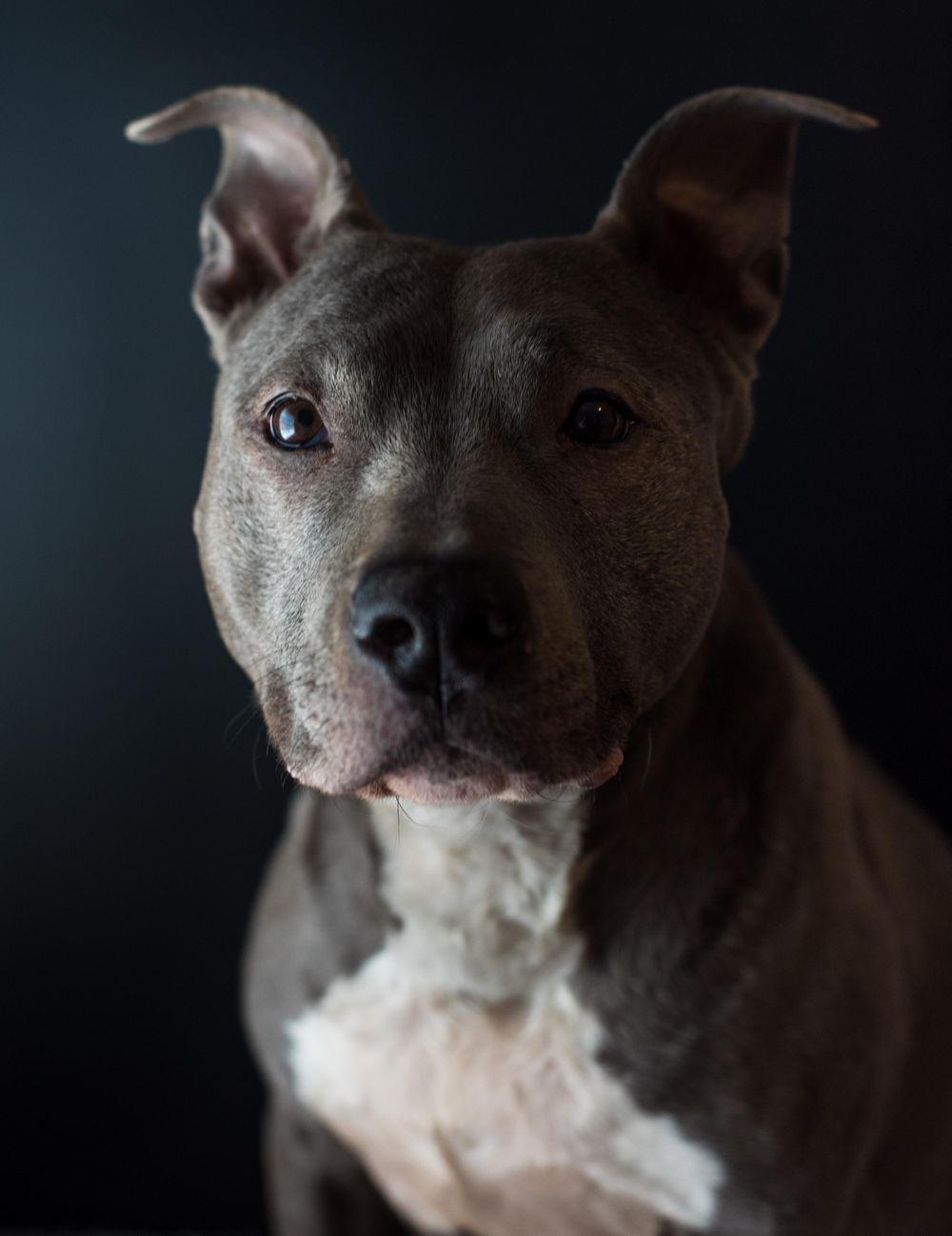 Pet Portraits - image 2 - student project