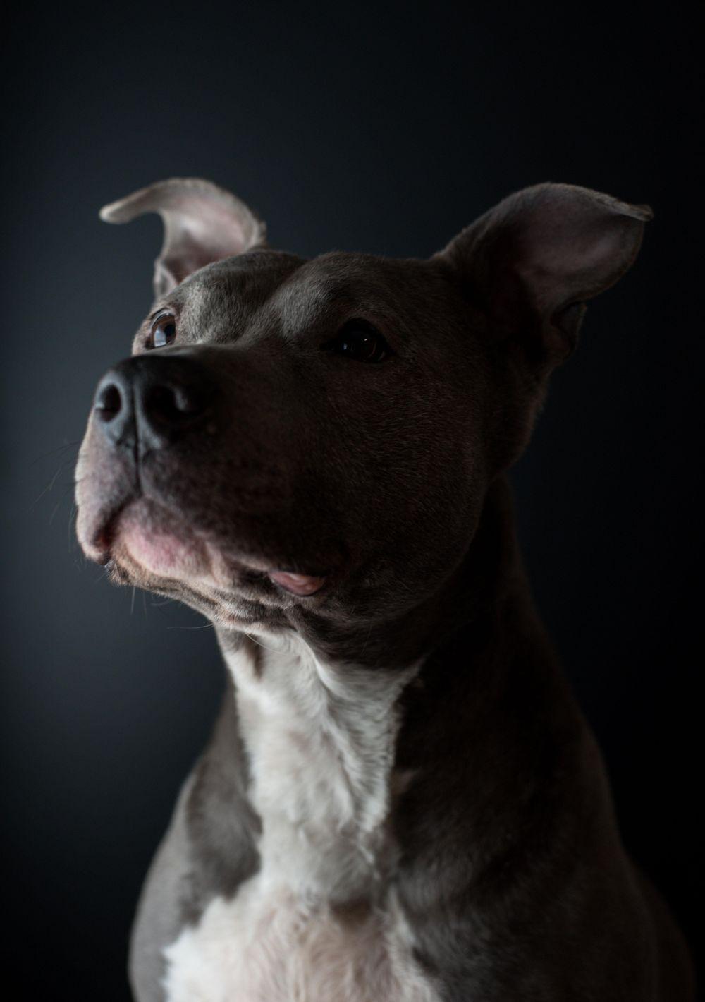 Pet Portraits - image 4 - student project