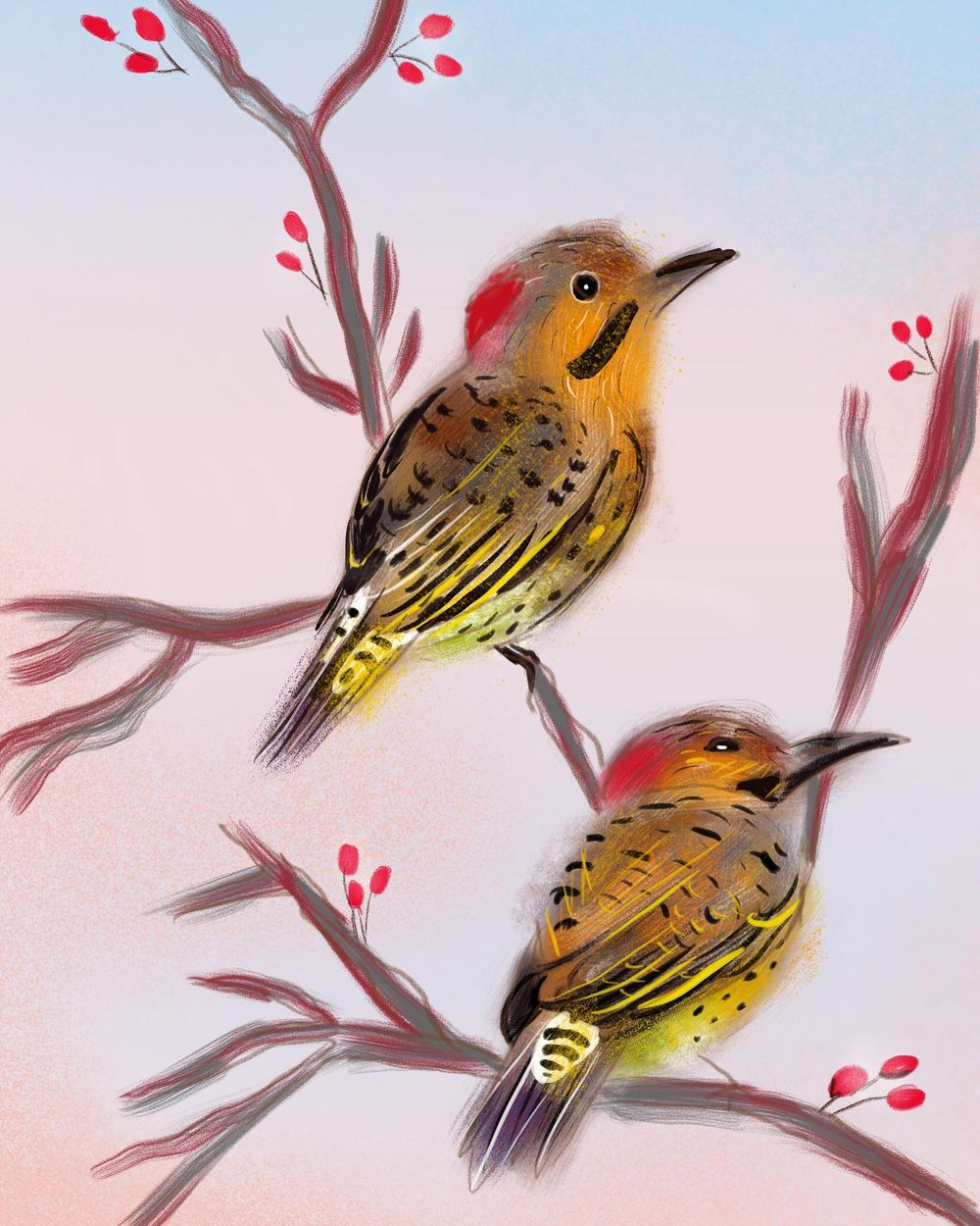 Northern Flicker in Procreate - image 1 - student project