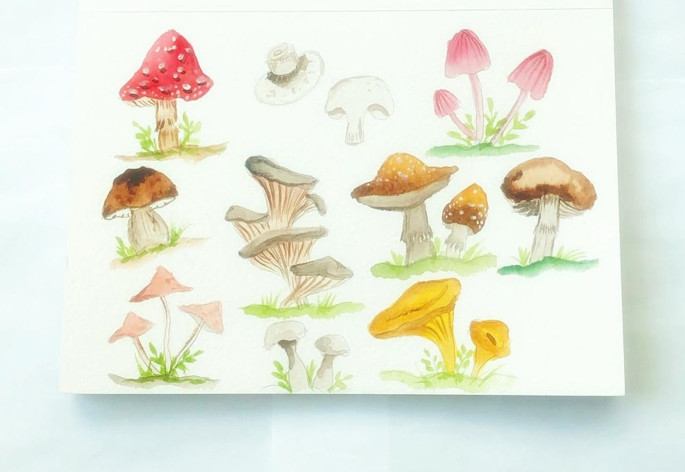 Watercolor mushrooms - image 1 - student project